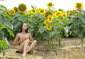 brunette, nude, naked, outdoor, sunflowers, handbra, tits, unknown
