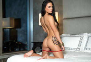 playboy, dark haired, back, meghan leopard, ass, bed, tanned, undressing, red panties